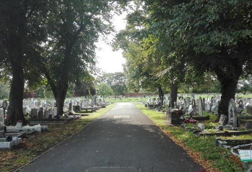 Road through the East London Cemetery